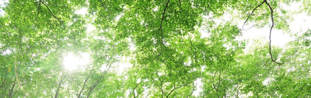 世界遺産 白神山地 ヒバの原生林